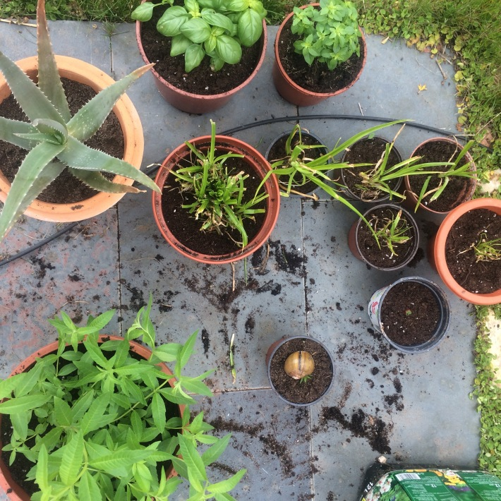 garden potting plants aromatic