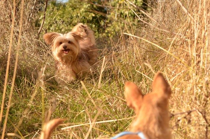 adopciones perros pequeños madrid